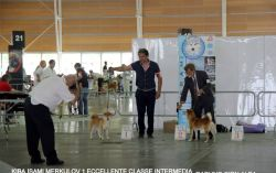 Expo Internazionale Canina di Alba – dogs for Children